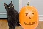 10.3-Halloween.jpg