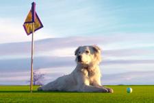 dog_golf.jpg