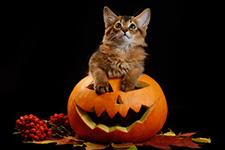 halloween pet tips.jpg