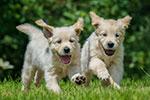 16 july puppy social