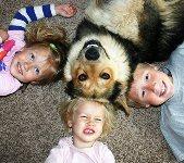 kids dog