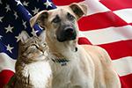 veterans adoptionv2.png